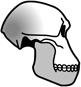 Tinderbox Prehistoric Skull graphic